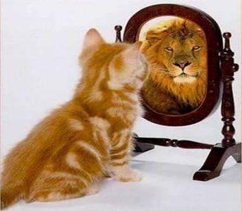 lion_cat